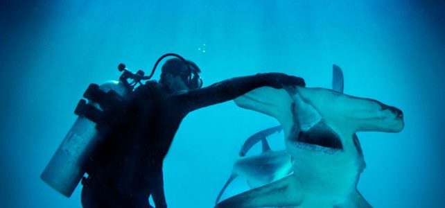 Hammerhead Shark Encounter