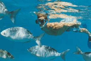 Culebra Divers - Snorkeling Tours