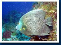 carysfort-reef