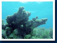 crocker-reef