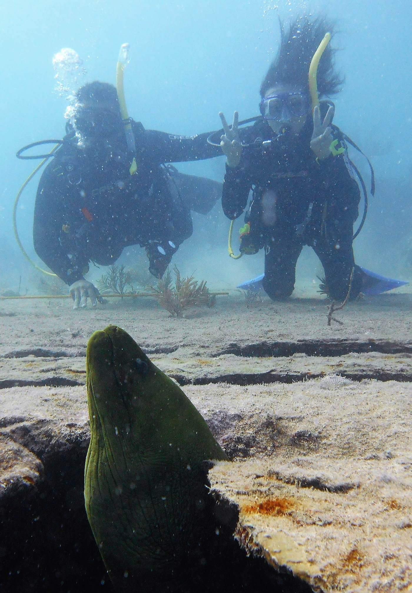 Divemaster Course - Sail Fish Scuba - Key Largo, Florida ...