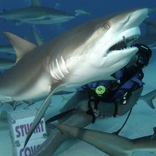Stuart Cove Shark Diving-2
