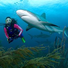 Stuart Cove Shark Diving-3